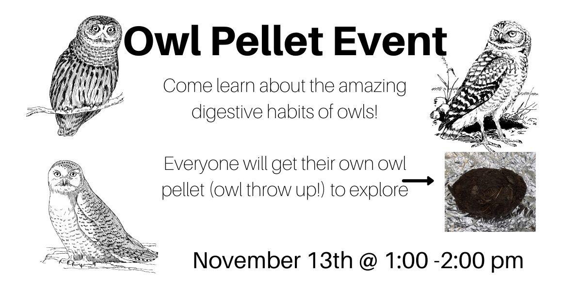 Owl Pellet Event.jpg